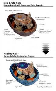 cells_comparison